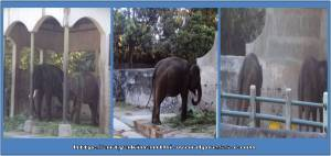 gajah di gembira loka