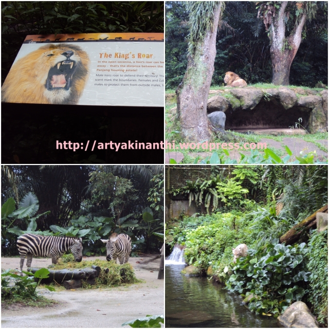 Lion, Giraffe, Zebra, and Tiger at Singapore Zoo
