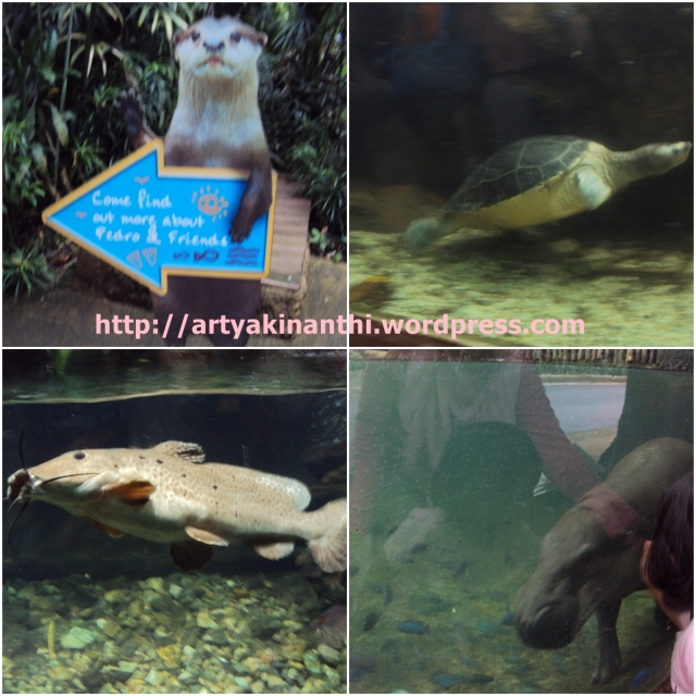 Animal in the water at singapore Zoo