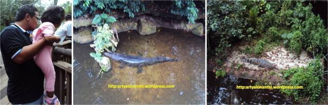 Crocodile in Singapore Zoo