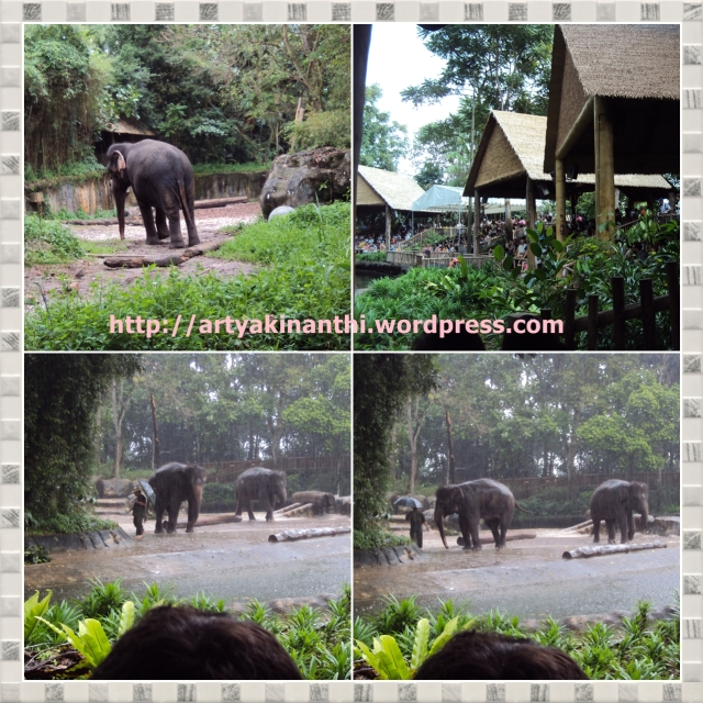 Elephant of Asia in Singapore Zoo
