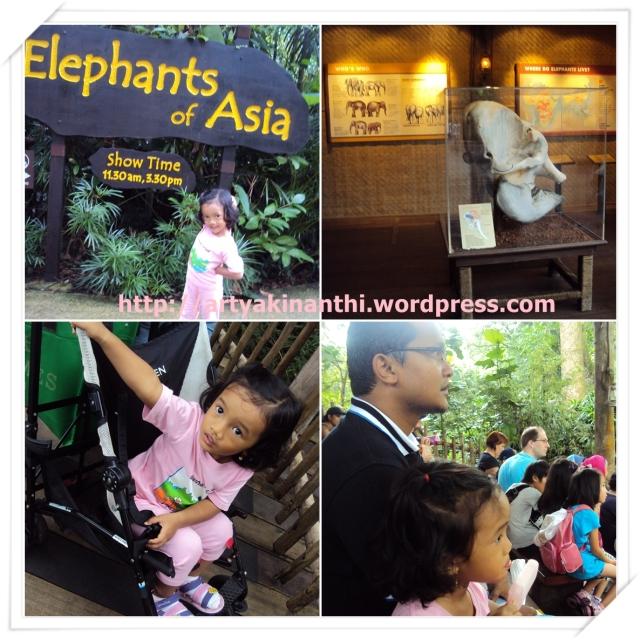 Tempat pertunjukan Gajah Asia di Singapore Zoo