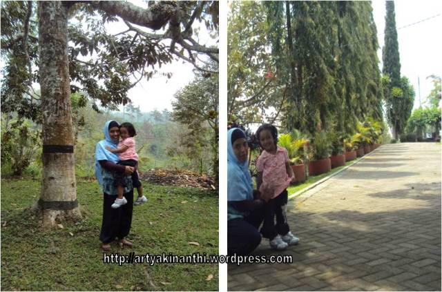 dibawah pohon durian