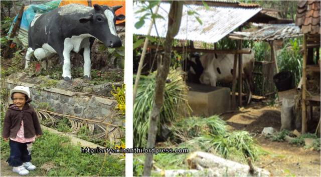 Kinan berpose dekat patung sapi di Sendang