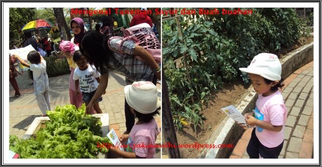 Ada Wahan mengenal tanaman dan juga sayur sayuran dan buah buahan