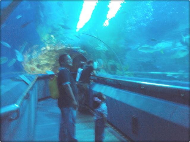 aquaria 1