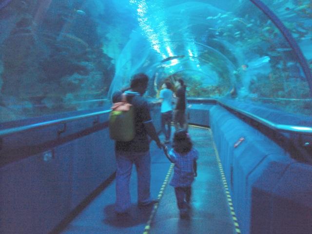 ayah dan adek di aquaria