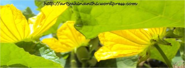 bunga labu