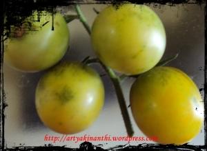 Tomat hasil bercocok tanam Uti dan Atung kinan