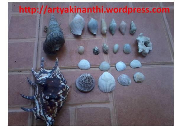 Sebagian cangkang kerang yang dibawa dari pantai Sakerah