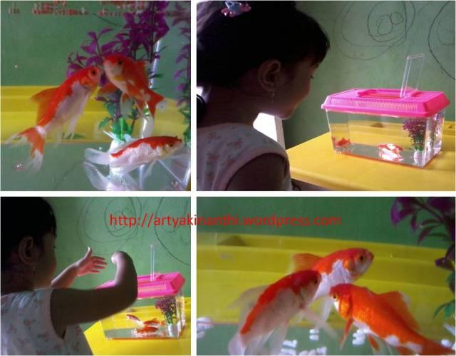 Mini Aquarium kejutan untuk kinan saat itu untuk membuatnya senang  dan mau kesekolah