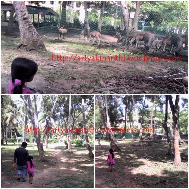 Mini Zoo lewat jalan potong  kebun